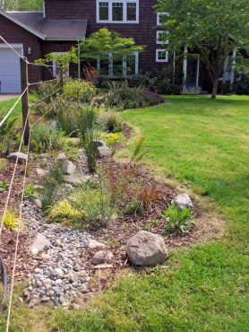 Ellen Gunderson's rain garden