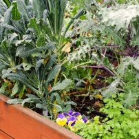 Plant Your Fall and Winter Garden