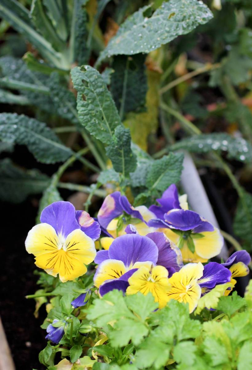 wshg net time to plant your fall and winter garden featured