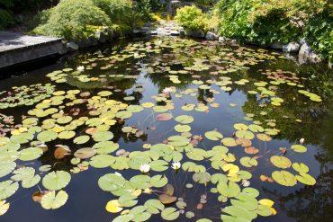 Water Gardening Part 3