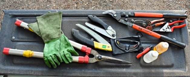 Good pruning tools and safety gear: bypass pruners, bypass loppers, sharpener and honing oil, alcohol, gauntlet leather gloves, safety glasses, folding saws, hedge clippers.