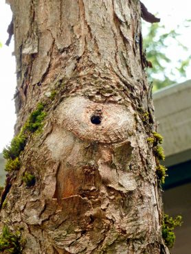 A tree can often wall off damage quite well if the cut was made properly, just outside the branch collar.