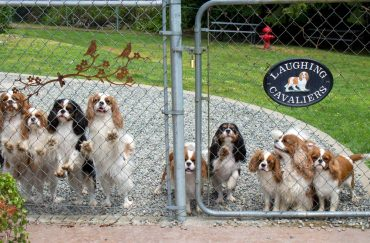 An English Country Cottage in Hansville - Cavalier King Charles spaniels