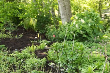 One of the gardens at Buck Lake Native Garden