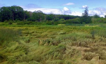 Theler Wetlands