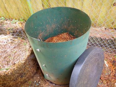 The beginnings of compost in a commercial covered bin
