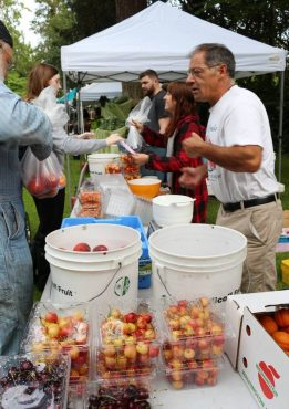 Why Farmers Markets are So Popular