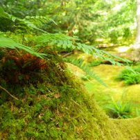 Moss and Lichens