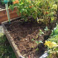 Ready for planting garlic