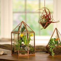Terrariums are mini greenhouses that continue to grow in popularity, don't require a lot of care and are perfect for the holiday season whether given as gifts or used for décor. (Photo by Gardener's Supply Company)
