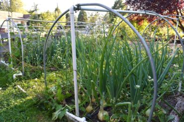 Low metal hoops remain in the garden year-round. Gayle Larson's garden.