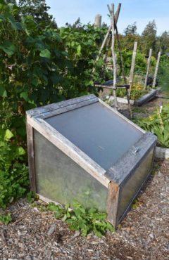 A lightweight cold frame at Whacky Nut Farm on Bainbridge Island
