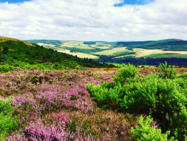 Hiking in the heather-covered highlands of Scotland