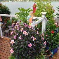Liberty Bay Garden