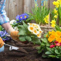 Peat Free Gardening