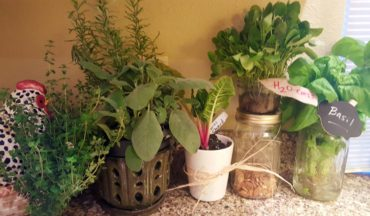 Water and light help keep fresh herbs and greens going in the kitchen during winter.