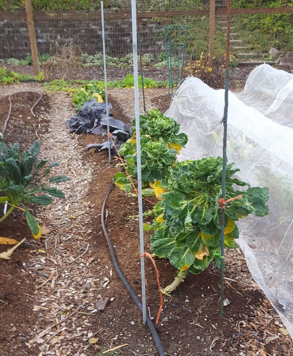 wshg net winter kitchen gardens featured the garden
