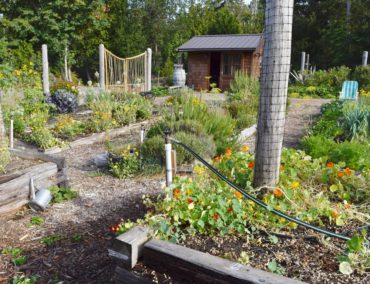 Wacky Nut farm community garden. Garden beds and other structures are made from trees felled on the property.