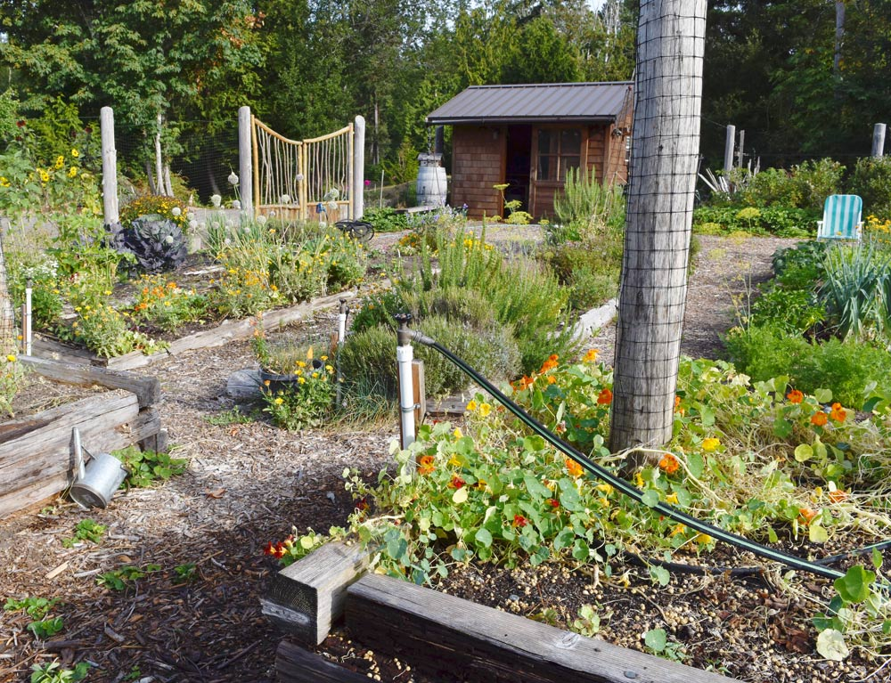 WSHG.NET | Community Gardens and P-Patches in West Sound | Featured ...