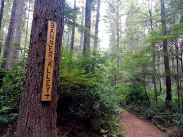 The Banner Alley Trail cuts through thick forest.