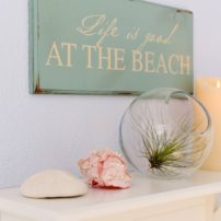Beachcomber details