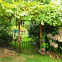 An arbor is a great way to utilize vertical space with vining plants like grapes or hops.