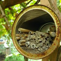 """A mason bee """"dormitory."""" Mason bees help promote pollination for fruit crops."""