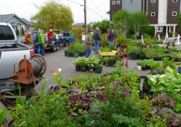 Friends of Manchester Library Plant Sale