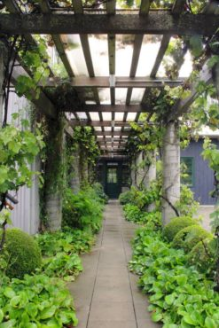 A long corridor between garage and home is roofed with a grape-covered pergola.