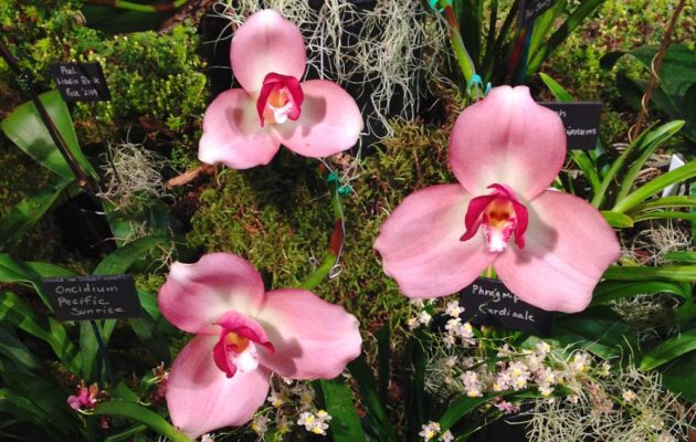 Orchids as Houseplants