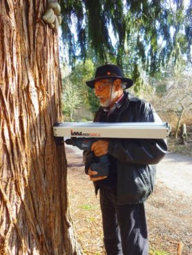 "Ribeiro looks for internal wood rot in a tree using a ""Resistograph."""