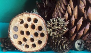 Close-up of the logs with 5/8-inch holes drilled for convenient homes for mason bees.