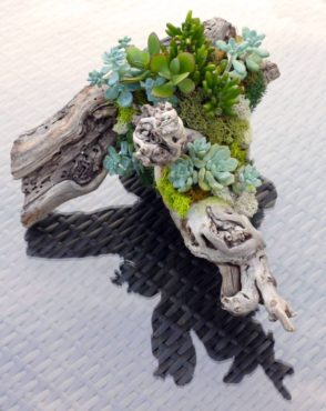 Wood planted with succulents and moss creates a lovely scene.