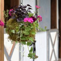 A mix of flowers and foliage plants live harmoniously together and hang about at the couple's stable, where they house their horses. (Photo courtesy of Patricia Ruff)