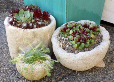 Succulents are favorite plants for hypertufa planters.