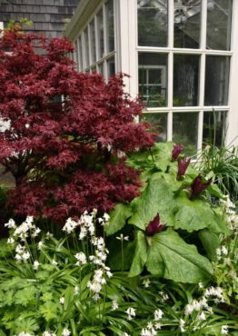 The conservatory surrounded by trilliums and Japanese maple