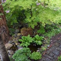 One of the ponds viewed from an upstairs bedroom