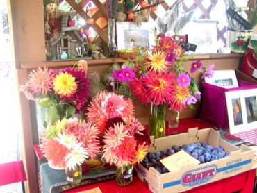 Donna's dahlias for sale