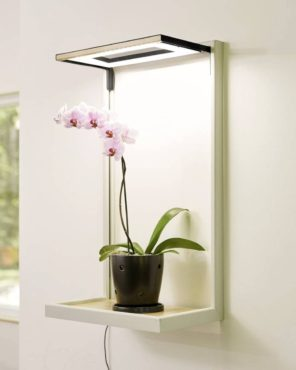 Orchids do best with 12 to 14 hours of sunlight and indoor light systems can help supplement the amount of light needed for the plants to thrive. (Photo courtesy Gardener's Supply Company)
