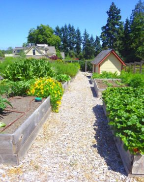 Growing food locally for the community