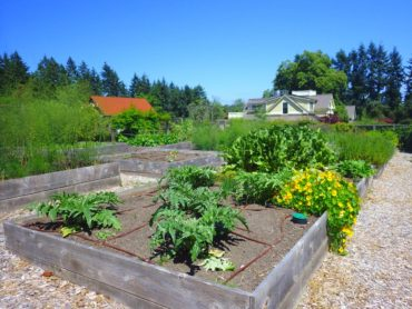 Heyday's kitchen garden