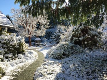 Winter garden snow scene with paperbark maple