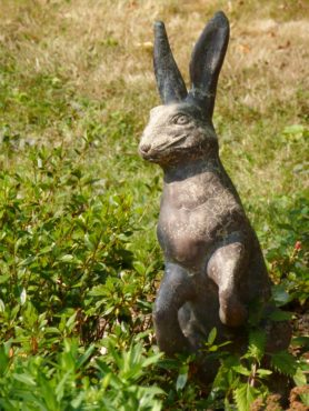 Peter Rabbit, where did you leave your waistcoat? Garden of Lynn McIntyre, Bainbridge Island.