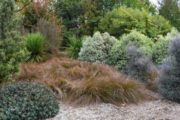 A New Zealand xeriscape theme is taken to a whole new level at the Seattle Arboretum.