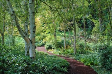 Bloedel Reserve delivers a serene scene with its Himalayan birch-lined path and a simple white/green color palette.