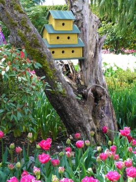 Colorful birdhouses will delight anyone, including the birds, bumblebees and spiders.
