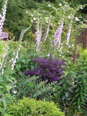 Public gardens like the Bellevue Botanic Garden showcase the power of thoughtful plant partnerships.
