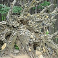 A natural sculpture in the middle of a forest can be easily replicated in a garden. Chile.
