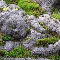 Is there anything more calming than a moss-covered sleeping goddess? Bainbridge in Bloom, 2007.