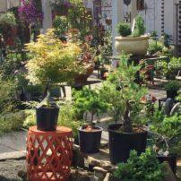 Bainbridge Gardens